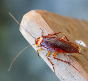 Articles about pests in your home and how a home warranty can provide pest control.